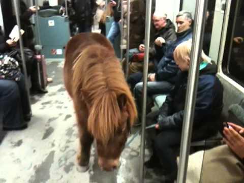 Pferd in der S-Bahn